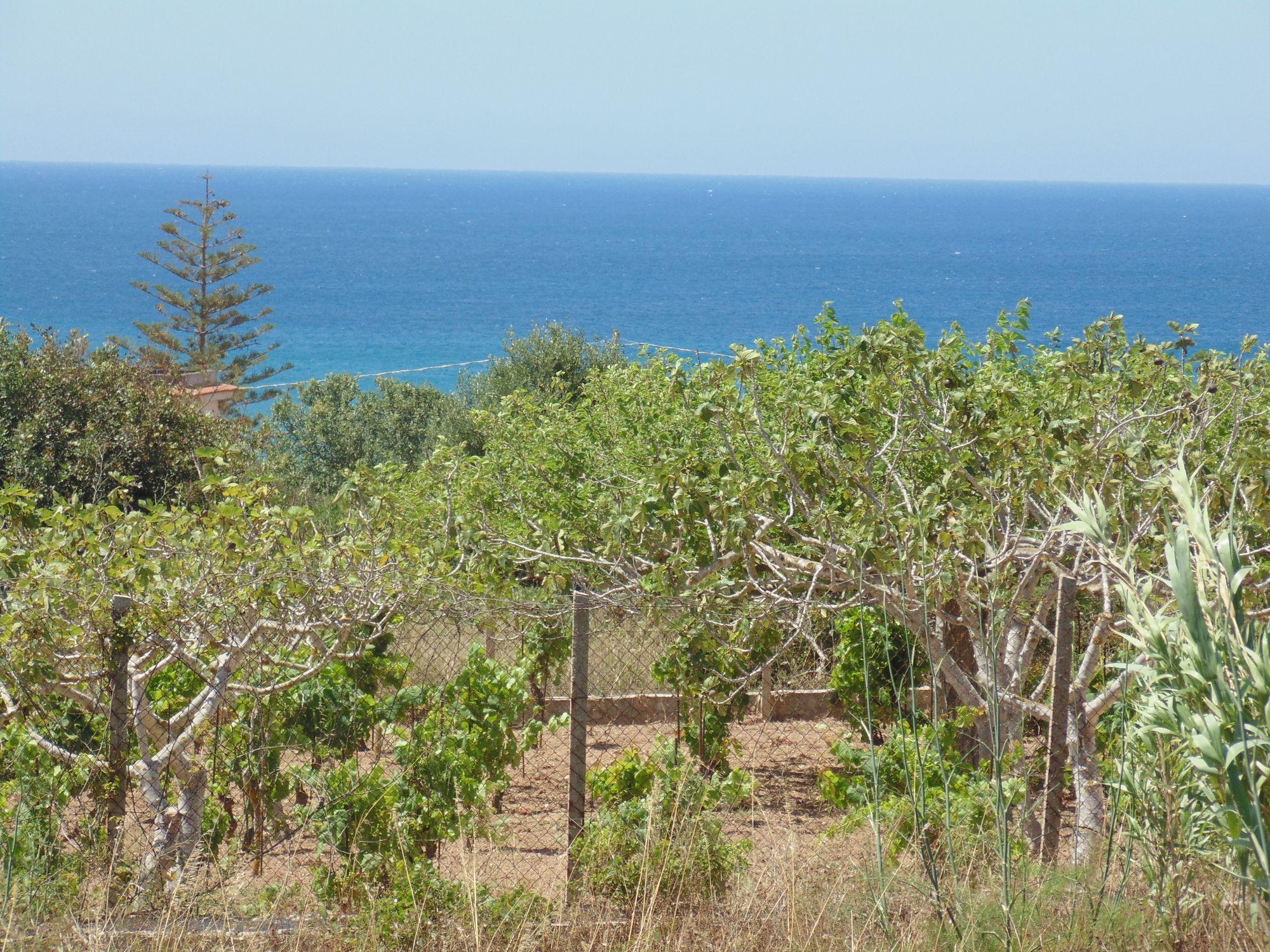 Terreno Agricolo di circa 3500 mq con vista mare in zona Costa dellAmbra  ...