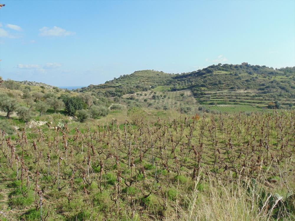 Terreno di 5 ettari, con vista panoramica, coltivato a vigneto, mandorleto, uliveto e qualche albero da frutto.     ...