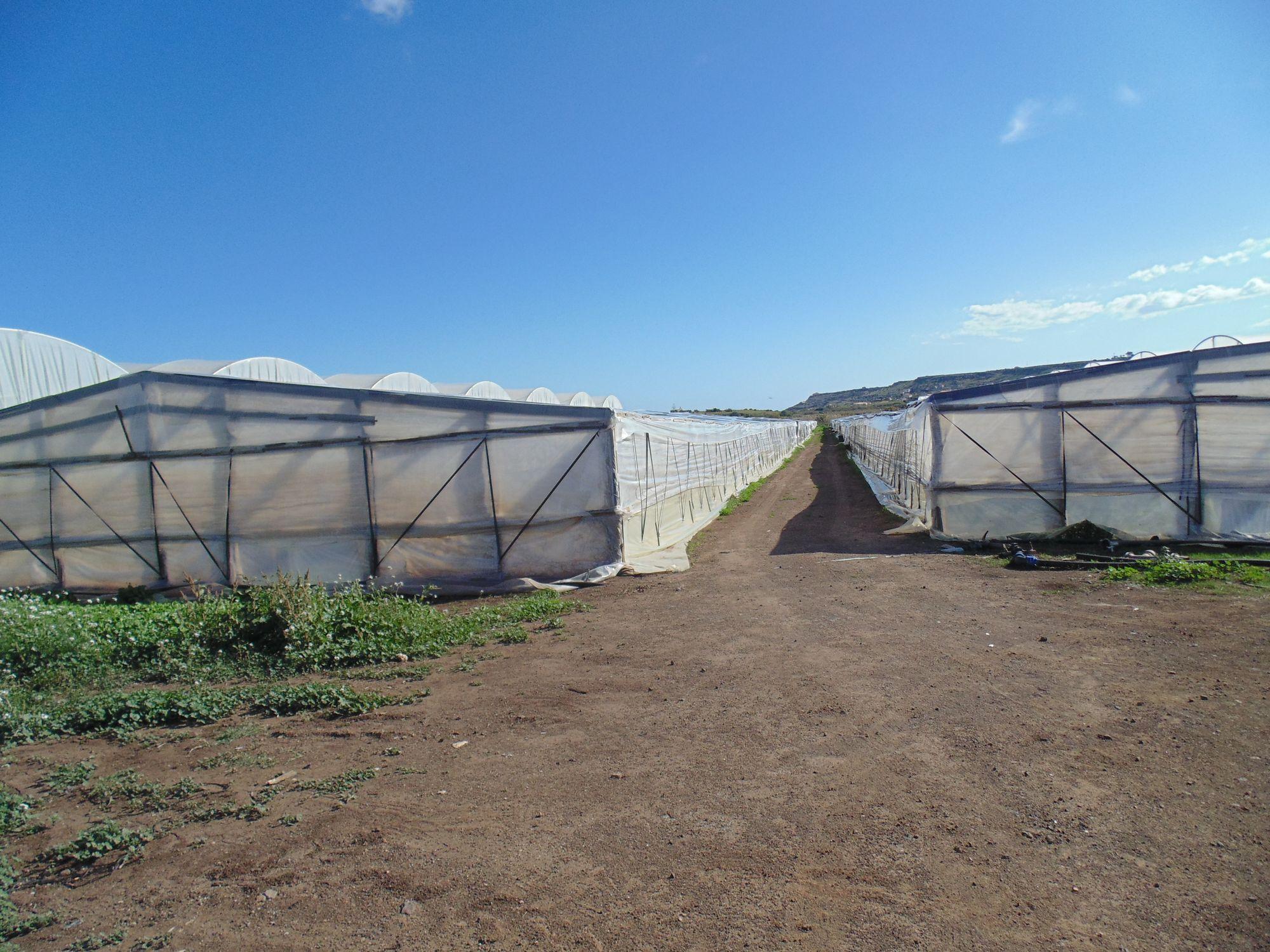 Terreno agricolo di circa 1,5 ettari situato in zona Morghella avente un pozzo trivellato, serre in   ...