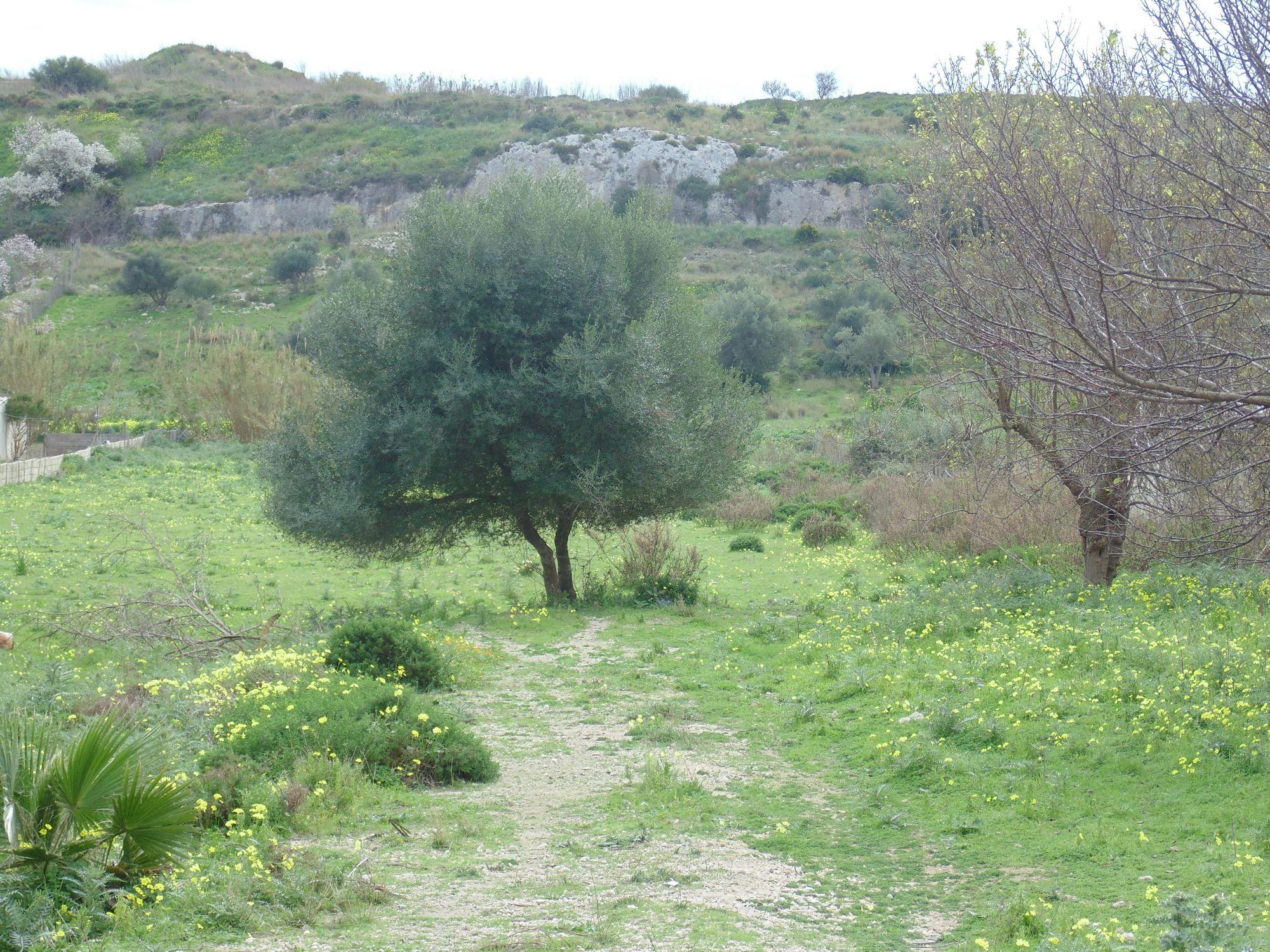 Terreno di circa 1 ettaro in prossimità del centro abitato, di cui la metà in zona edificabile.  ...